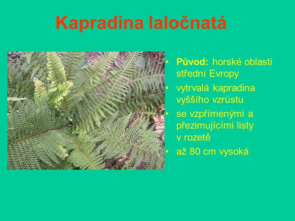 Kapradina laločnatá Původ: horské oblasti střední Evropy vytrvalá kapradina vyššího vzrůstu se vzpřímenými a přezimujícími listy v rozetě až 80 cm vys