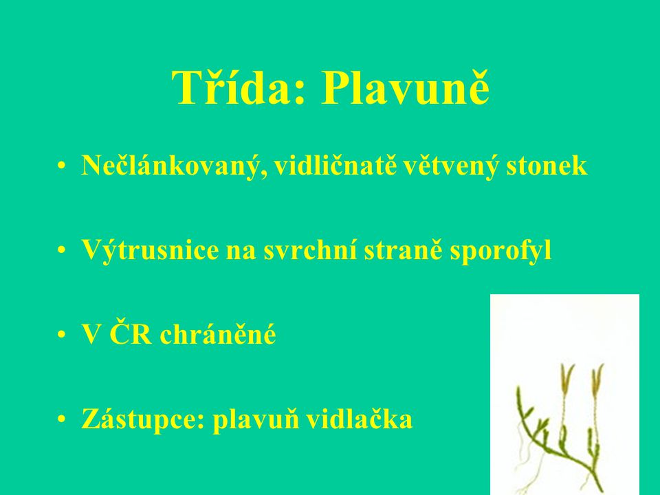 Třída: Kapradiny - byliny, v trop.