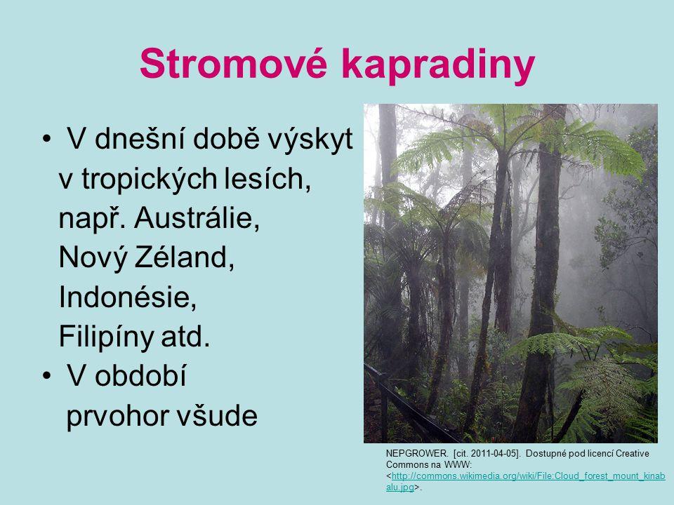 Stromové kapradiny V dnešní době výskyt v tropických lesích, např. Austrálie, Nový Zéland, Indonésie, Filipíny atd. V období prvohor všude NEPGROWER.