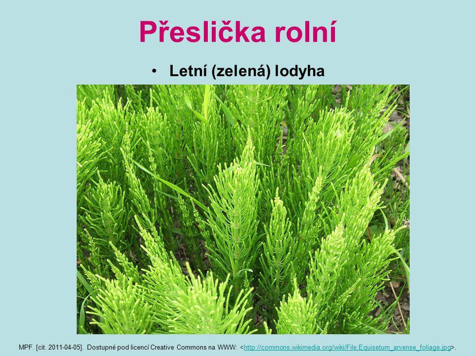Přeslička rolní Letní (zelená) lodyha MPF.[cit. 2011-04-05].