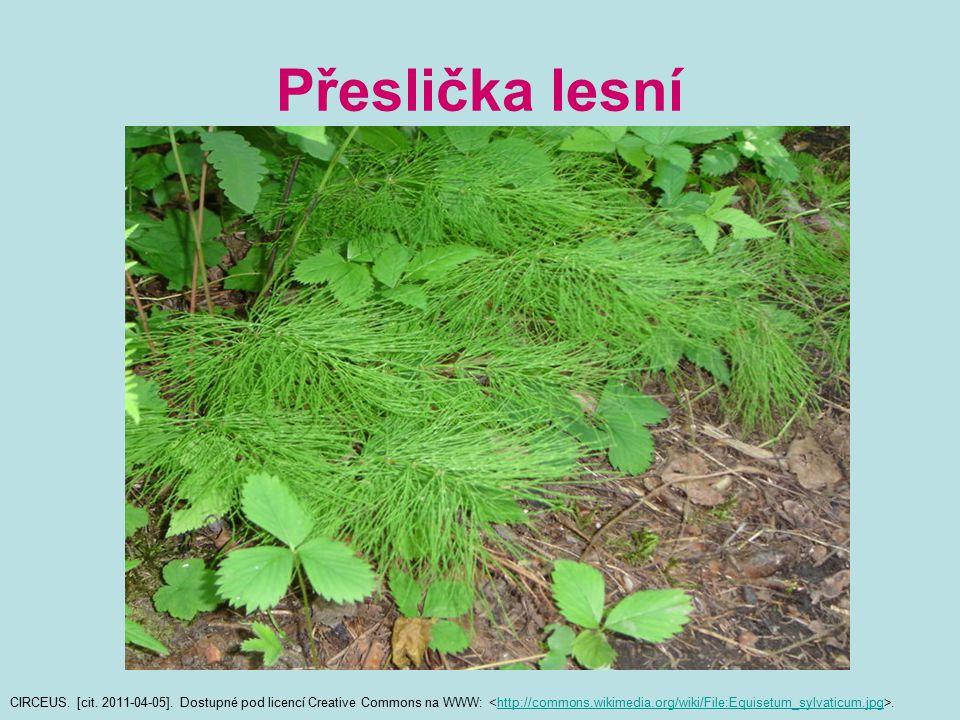 Přeslička lesní CIRCEUS. [cit. 2011-04-05]. Dostupné pod licencí Creative Commons na WWW:.http://commons.wikimedia.org/wiki/File:Equisetum_sylvaticum.
