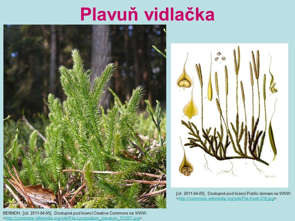 Plavuň vidlačka BERNDH. [cit. 2011-04-05]. Dostupné pod licencí Creative Commons na WWW:.http://commons.wikimedia.org/wiki/File:Lycopodium_clavatum_15