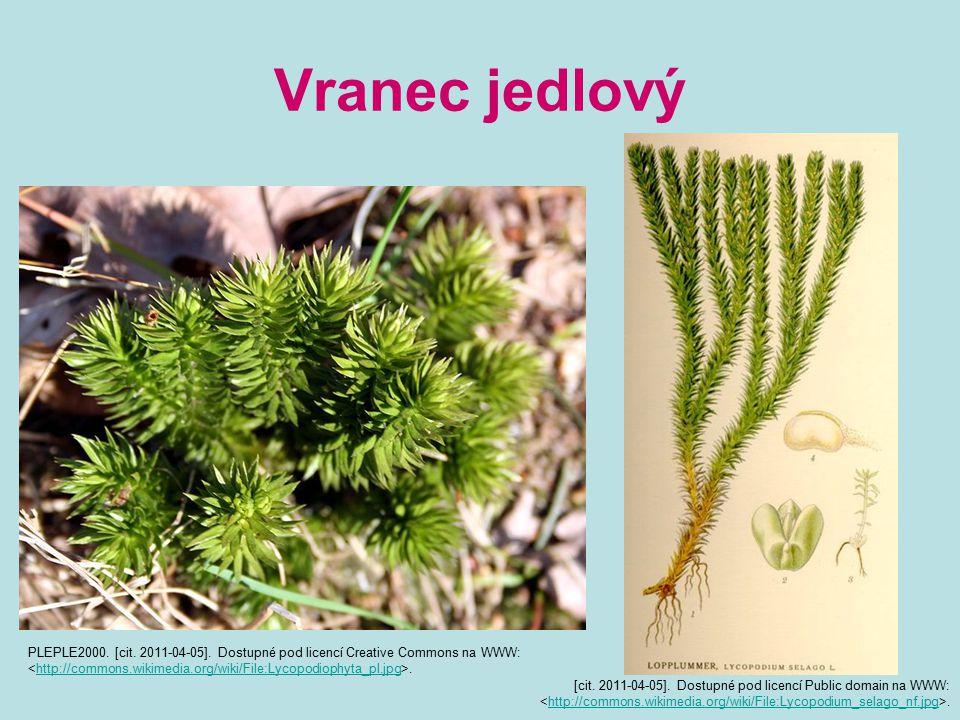 Vranec jedlový PLEPLE2000. [cit. 2011-04-05]. Dostupné pod licencí Creative Commons na WWW:.http://commons.wikimedia.org/wiki/File:Lycopodiophyta_pl.j
