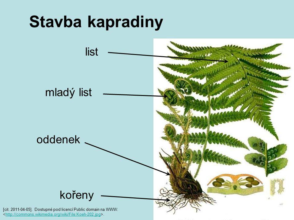 Stavba kapradiny [cit. 2011-04-05]. Dostupné pod licencí Public domain na WWW:.http://commons.wikimedia.org/wiki/File:Koeh-202.jpg list mladý list odd