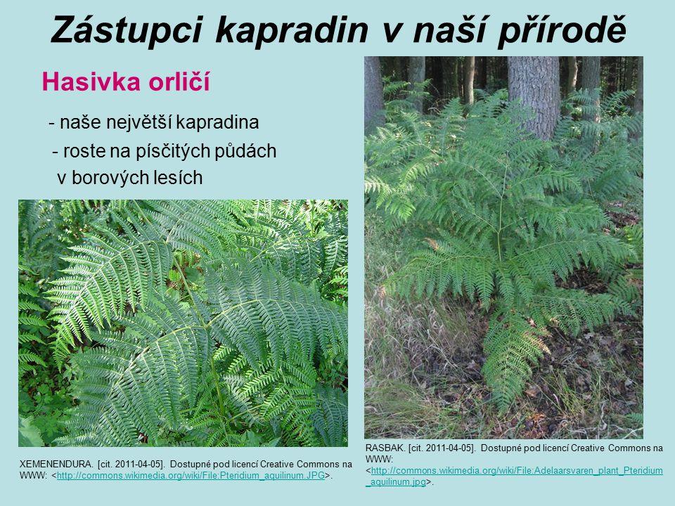 Zástupci kapradin v naší přírodě Hasivka orličí - naše největší kapradina - roste na písčitých půdách v borových lesích RASBAK. [cit. 2011-04-05]. Dos