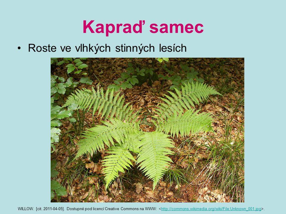 Kapraď samec Roste ve vlhkých stinných lesích WILLOW. [cit. 2011-04-05]. Dostupné pod licencí Creative Commons na WWW:.http://commons.wikimedia.org/wi
