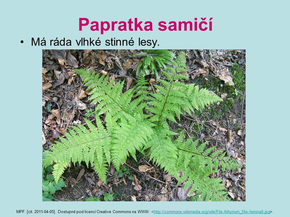 Papratka samičí Má ráda vlhké stinné lesy. MPF. [cit. 2011-04-05]. Dostupné pod licencí Creative Commons na WWW:.http://commons.wikimedia.org/wiki/Fil