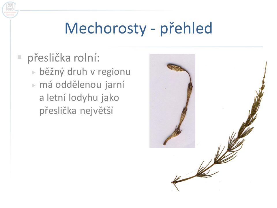 Mechorosty - přehled  přeslička rolní:  běžný druh v regionu  má oddělenou jarní a letní lodyhu jako přeslička největší