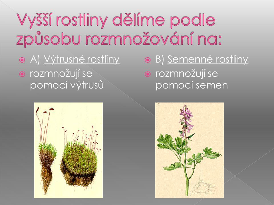  Charakteristika:  Mnohobuněčné organismy  Autotrofní nebo parazit  Tělo rozčleněno na kořen, stonek, list, květ, plod  Vyvinut systém pletiv, pokožka s průduchy  Vodní i suchozemské  Vývoj.