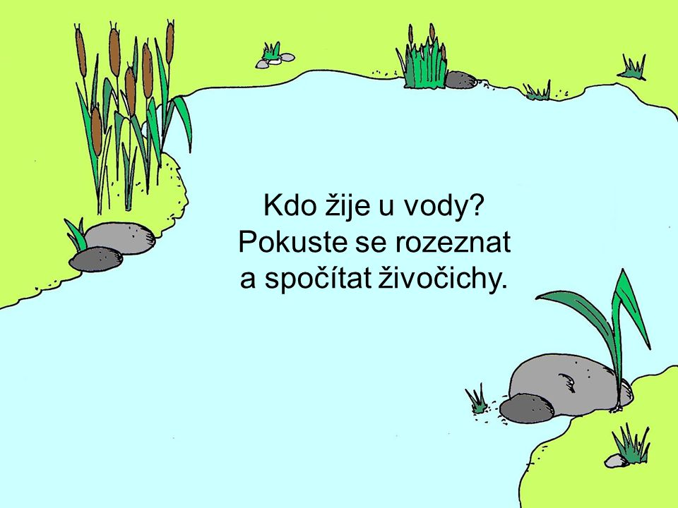 Kdo žije u vody? Pokuste se rozeznat a spočítat živočichy.