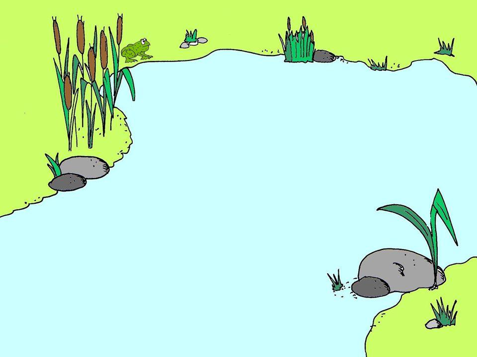 Kdo žije u vody Pokuste se rozeznat a spočítat živočichy.