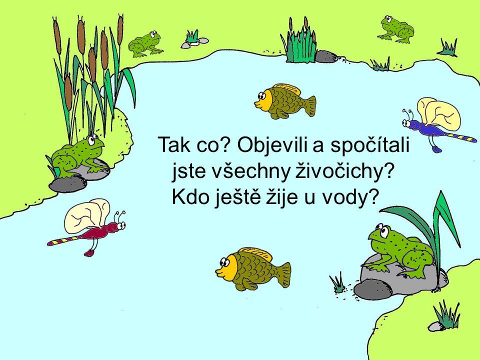 Tak co? Objevili a spočítali jste všechny živočichy? Kdo ještě žije u vody?