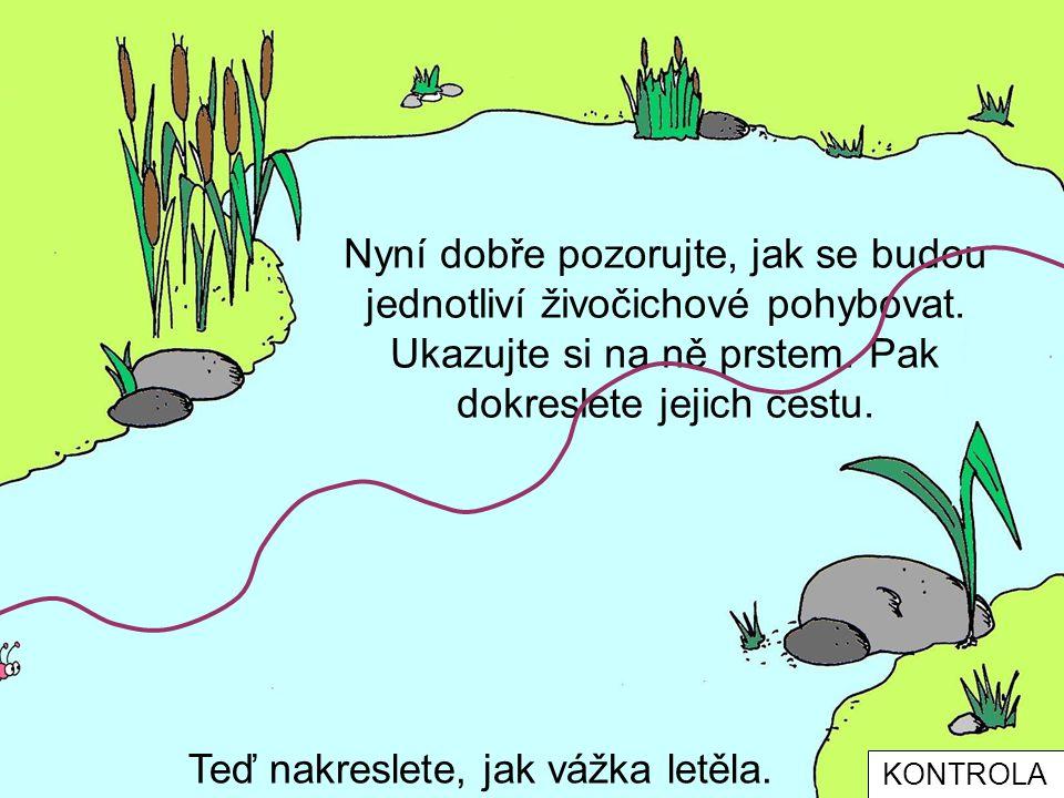 Tak co Objevili a spočítali jste všechny živočichy Kdo ještě žije u vody