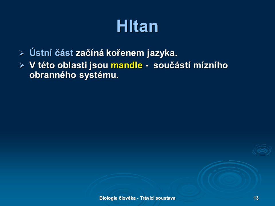 Biologie člověka - Trávicí soustava13 Hltan  Ústní část začíná kořenem jazyka.  V této oblasti jsou mandle - součástí mízního obranného systému.