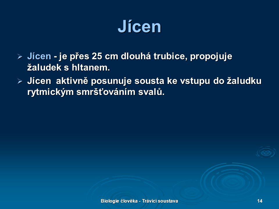 Biologie člověka - Trávicí soustava14 Jícen  Jícen - je přes 25 cm dlouhá trubice, propojuje žaludek s hltanem.  Jícen aktivně posunuje sousta ke vs