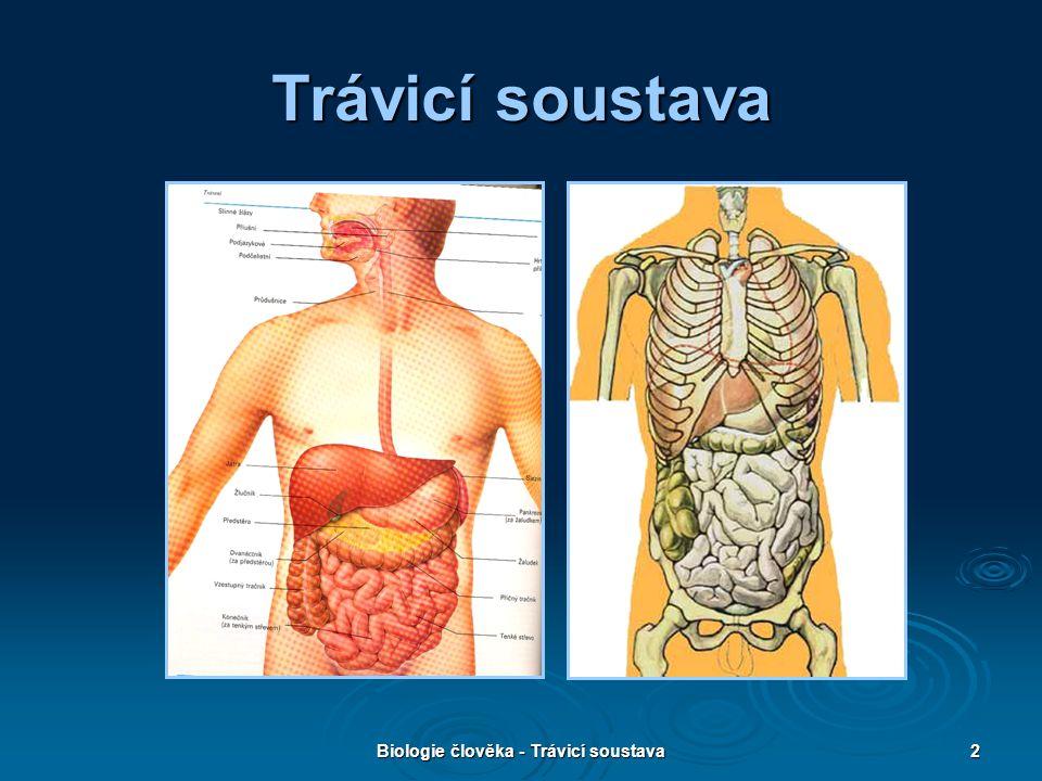 Biologie člověka - Trávicí soustava13 Hltan  Ústní část začíná kořenem jazyka.