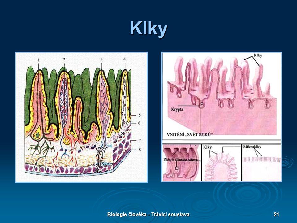Biologie člověka - Trávicí soustava21 Klky
