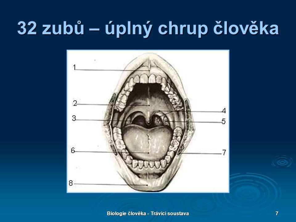 Biologie člověka - Trávicí soustava28 Přiřazování pojmů Žluč Dvanáctník Tlusté střevo Tenké střevo Trvalý chrup 32 zubů Vyústění žlučníku a pankreatu Štěpení tuků Klky Konečník