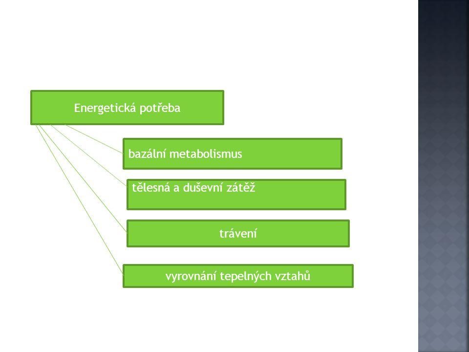 Energetická potřeba bazální metabolismus tělesná a duševní zátěž trávení vyrovnání tepelných vztahů