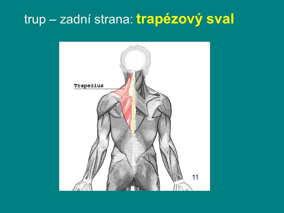 trup – zadní strana: trapézový sval 11