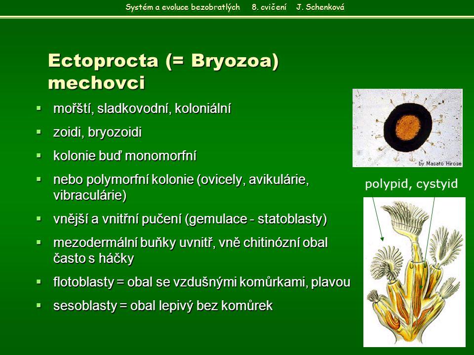 Ectoprocta (= Bryozoa) mechovci  mořští, sladkovodní, koloniální  zoidi, bryozoidi  kolonie buď monomorfní  nebo polymorfní kolonie (ovicely, avik