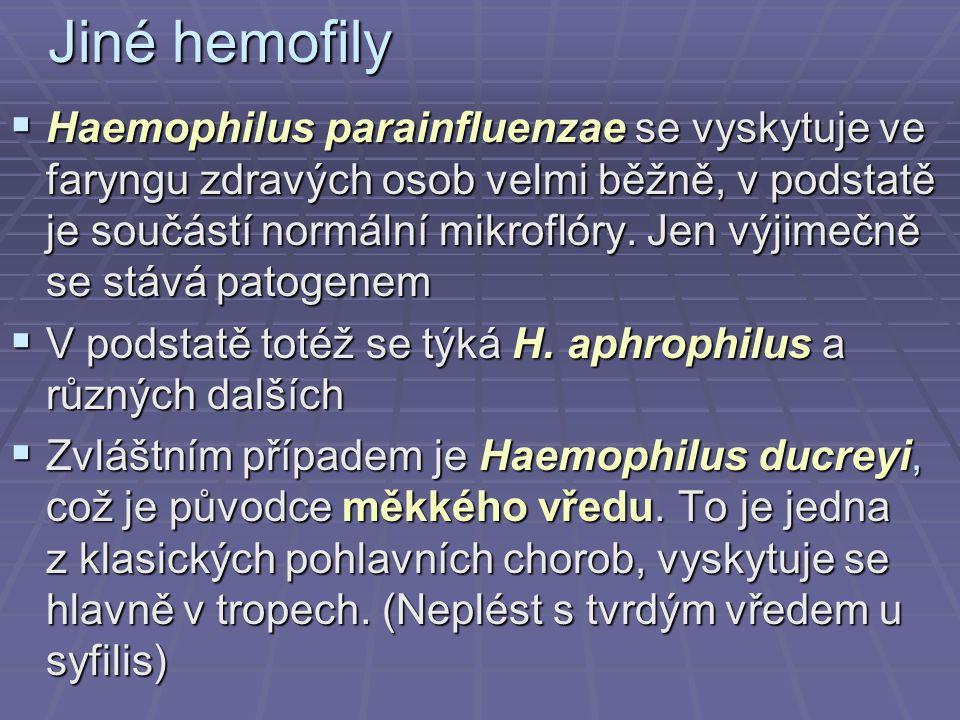 Jiné hemofily  Haemophilus parainfluenzae se vyskytuje ve faryngu zdravých osob velmi běžně, v podstatě je součástí normální mikroflóry. Jen výjimečn