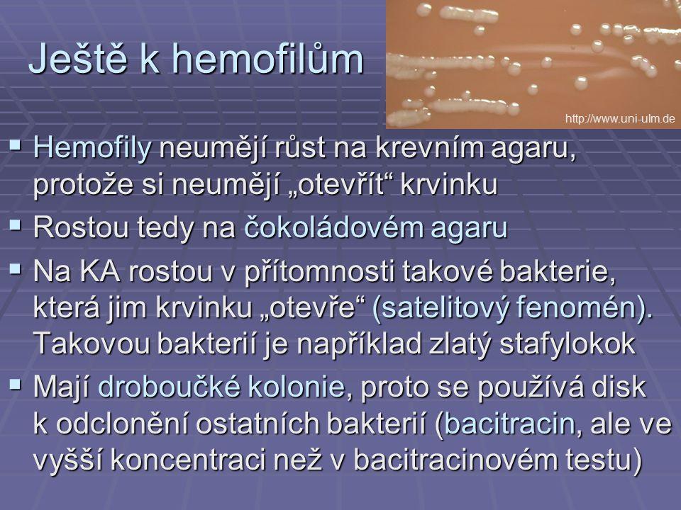 """Ještě k hemofilům  Hemofily neumějí růst na krevním agaru, protože si neumějí """"otevřít"""" krvinku  Rostou tedy na čokoládovém agaru  Na KA rostou v p"""