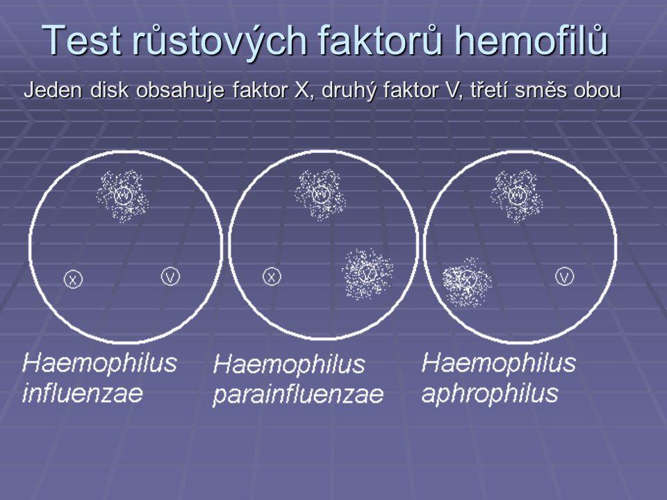 Test růstových faktorů hemofilů Jeden disk obsahuje faktor X, druhý faktor V, třetí směs obou
