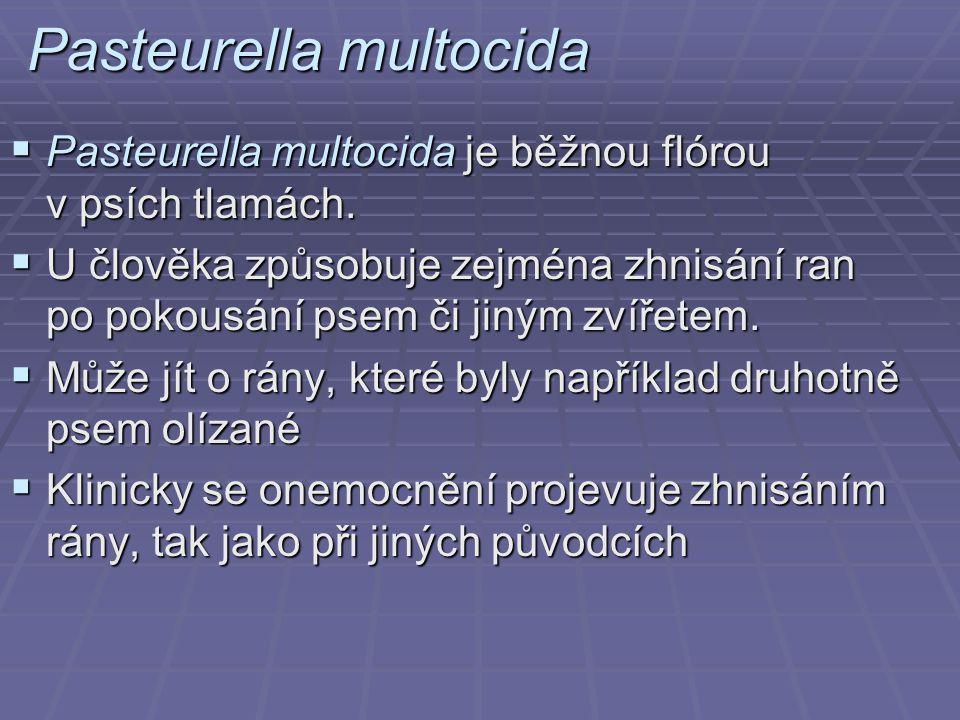 Pasteurella multocida  Pasteurella multocida je běžnou flórou v psích tlamách.  U člověka způsobuje zejména zhnisání ran po pokousání psem či jiným