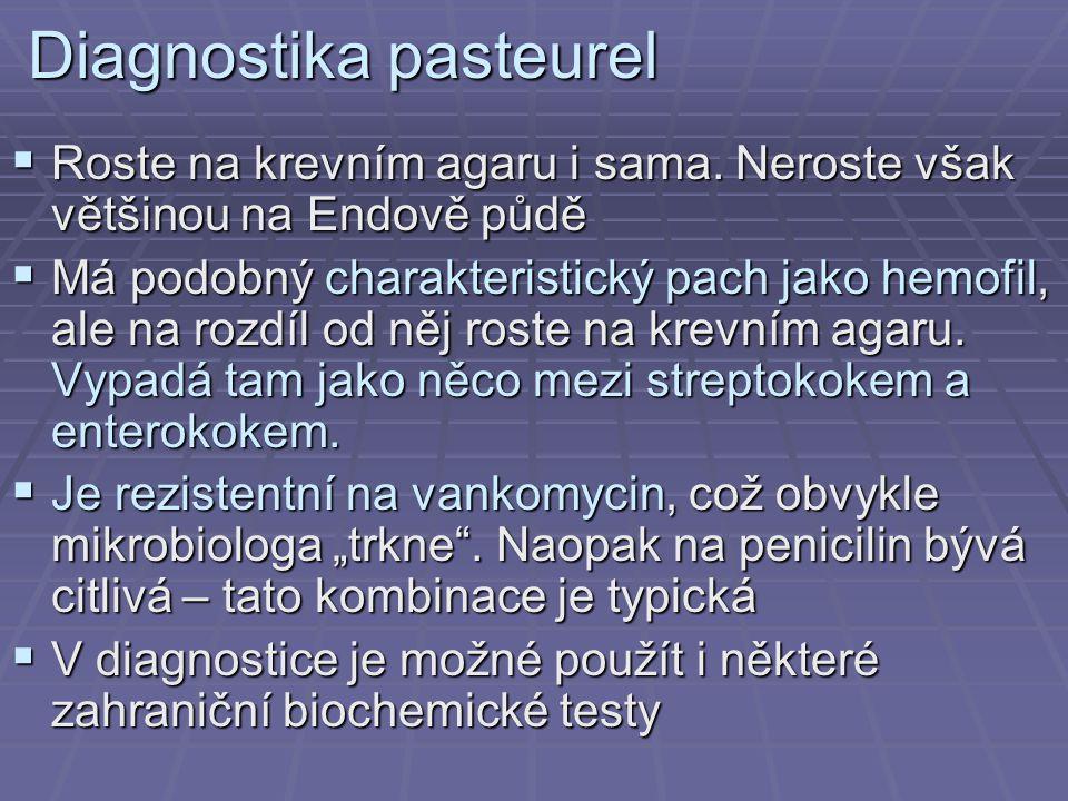 Diagnostika pasteurel  Roste na krevním agaru i sama. Neroste však většinou na Endově půdě  Má podobný charakteristický pach jako hemofil, ale na ro