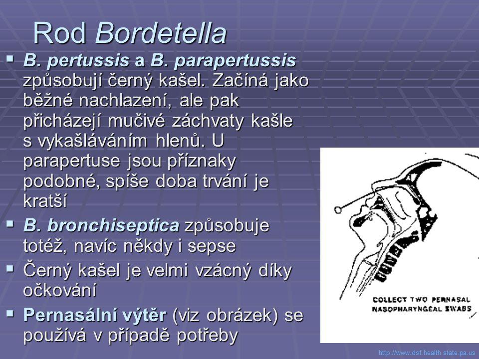 Rod Bordetella  B. pertussis a B. parapertussis způsobují černý kašel. Začíná jako běžné nachlazení, ale pak přicházejí mučivé záchvaty kašle s vykaš