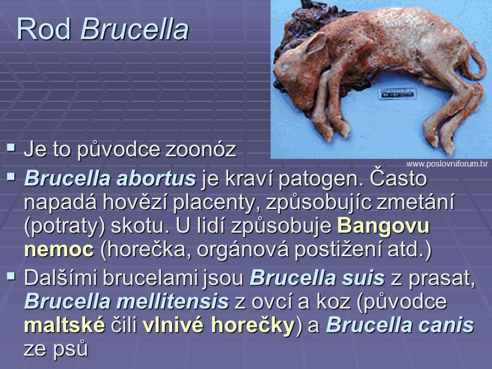 Rod Brucella  Je to původce zoonóz  Brucella abortus je kraví patogen. Často napadá hovězí placenty, způsobujíc zmetání (potraty) skotu. U lidí způs