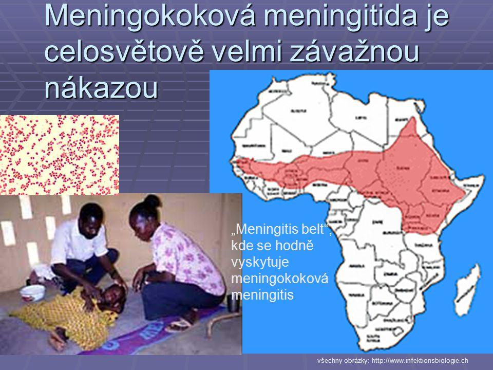 """Meningokoková meningitida je celosvětově velmi závažnou nákazou """"Meningitis belt"""", kde se hodně vyskytuje meningokoková meningitis všechny obrázky: ht"""