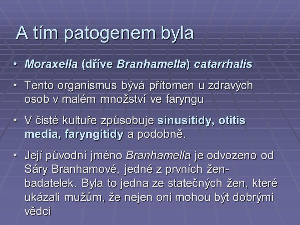 A tím patogenem byla Moraxella (dříve Branhamella) catarrhalisMoraxella (dříve Branhamella) catarrhalis Tento organismus bývá přítomen u zdravých osob v malém množství ve farynguTento organismus bývá přítomen u zdravých osob v malém množství ve faryngu V čisté kultuře způsobuje sinusitidy, otitis media, faryngitidy a podobně.V čisté kultuře způsobuje sinusitidy, otitis media, faryngitidy a podobně.