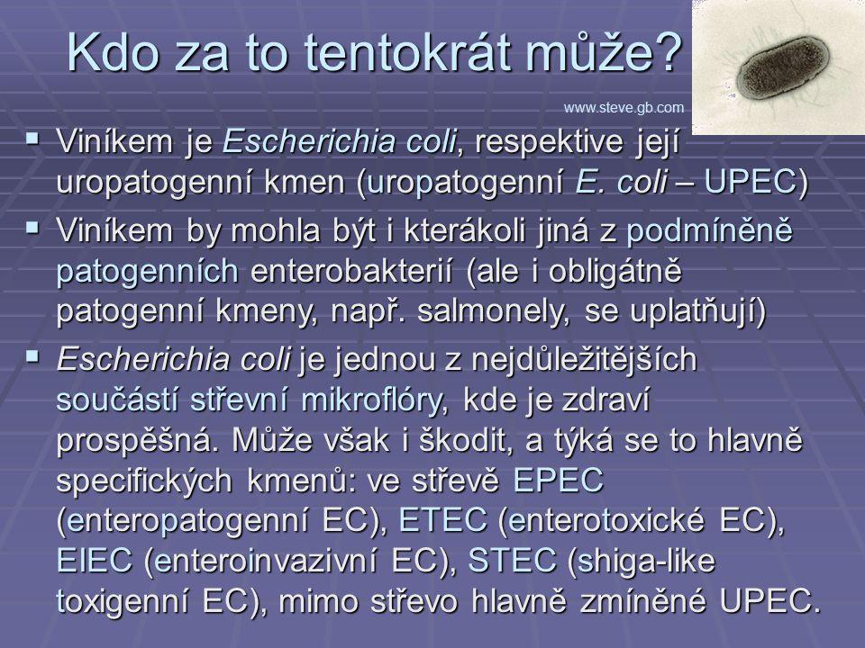 Kdo za to tentokrát může?  Viníkem je Escherichia coli, respektive její uropatogenní kmen (uropatogenní E. coli – UPEC)  Viníkem by mohla být i kter