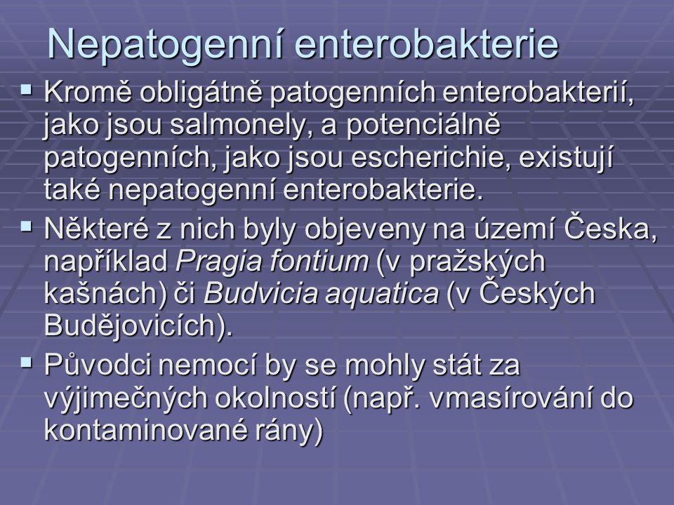 Nepatogenní enterobakterie  Kromě obligátně patogenních enterobakterií, jako jsou salmonely, a potenciálně patogenních, jako jsou escherichie, existují také nepatogenní enterobakterie.