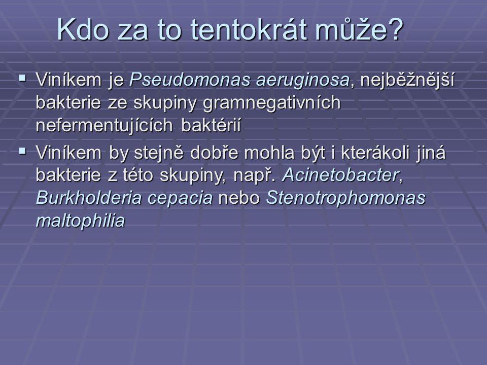 Kdo za to tentokrát může?  Viníkem je Pseudomonas aeruginosa, nejběžnější bakterie ze skupiny gramnegativních nefermentujících baktérií  Viníkem by