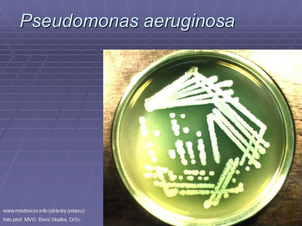 Pseudomonas aeruginosa www.medmicro.info (stránky ústavu) foto prof. MVD. Boris Skalka, DrSc.