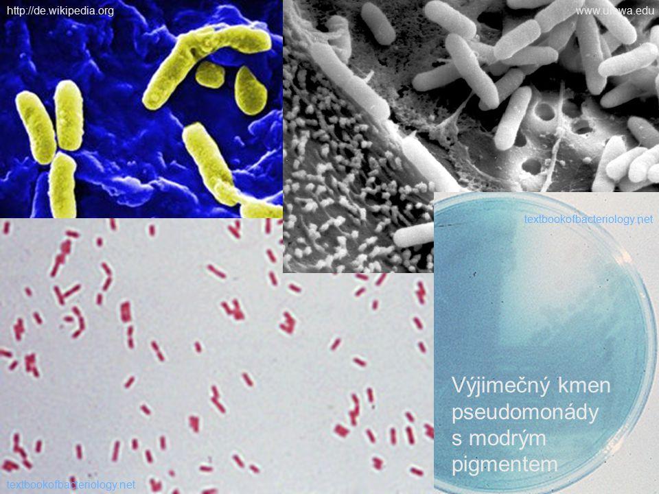 Výjimečný kmen pseudomonády s modrým pigmentem textbookofbacteriology.net http://de.wikipedia.orgwww.uiowa.edu