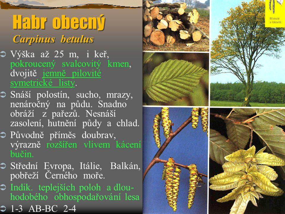 Habr obecný Carpinus betulus  Výška až 25 m, i keř, pokroucený svalcovitý kmen, dvojitě jemně pilovité symetrické listy.  Snáší polostín, sucho, mra