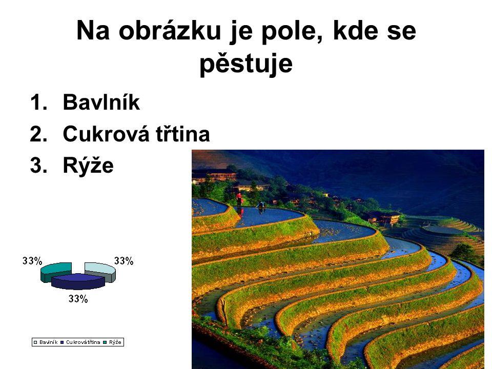 Na obrázku je pole, kde se pěstuje 1.Bavlník 2.Cukrová třtina 3.Rýže