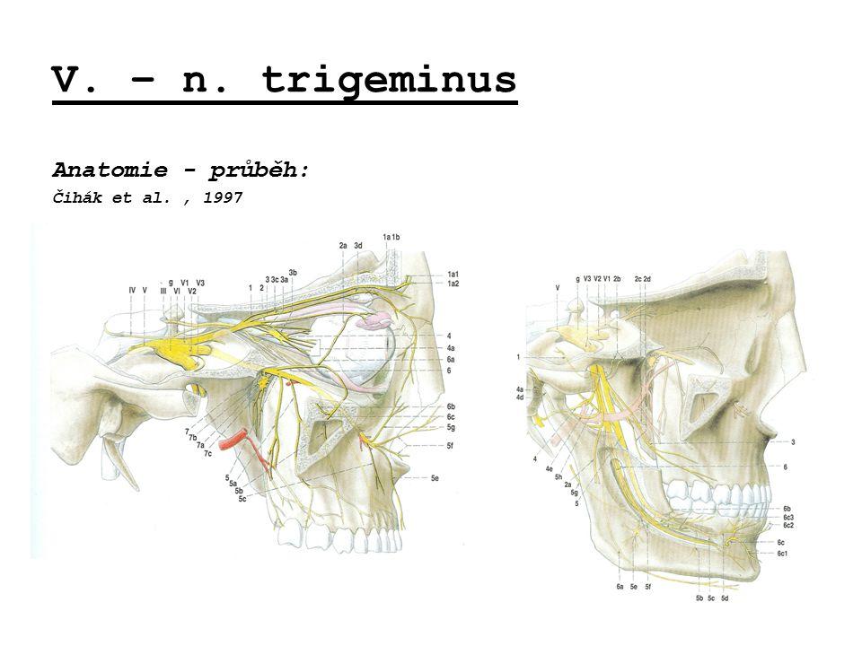 V. – n. trigeminus Anatomie - průběh: Čihák et al., 1997