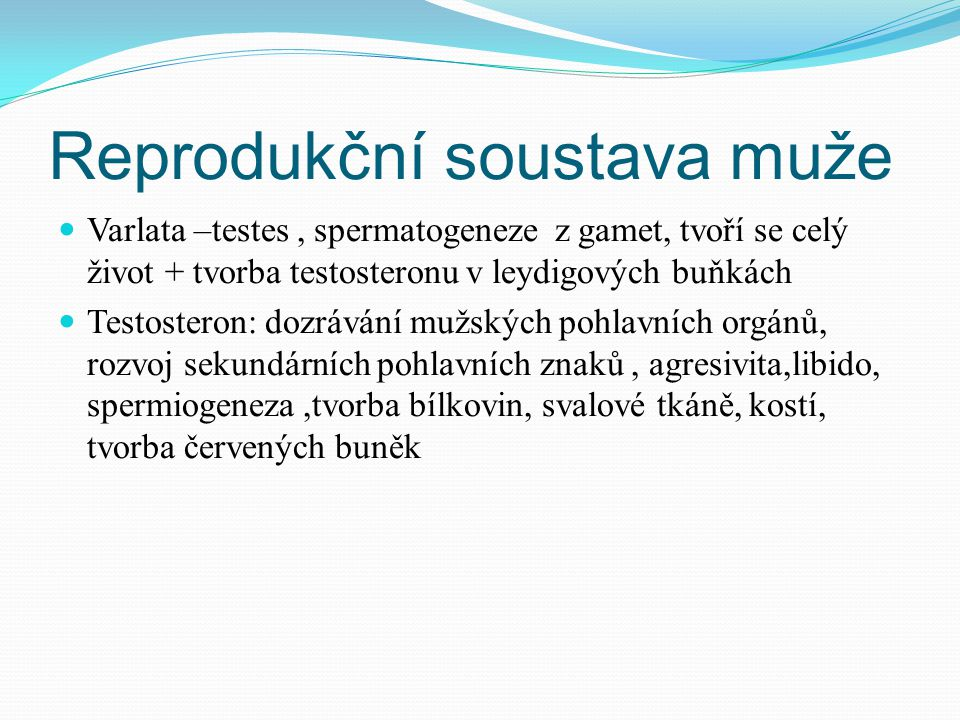 Reprodukční soustava muže Varlata –testes, spermatogeneze z gamet, tvoří se celý život + tvorba testosteronu v leydigových buňkách Testosteron: dozrávání mužských pohlavních orgánů, rozvoj sekundárních pohlavních znaků, agresivita,libido, spermiogeneza,tvorba bílkovin, svalové tkáně, kostí, tvorba červených buněk