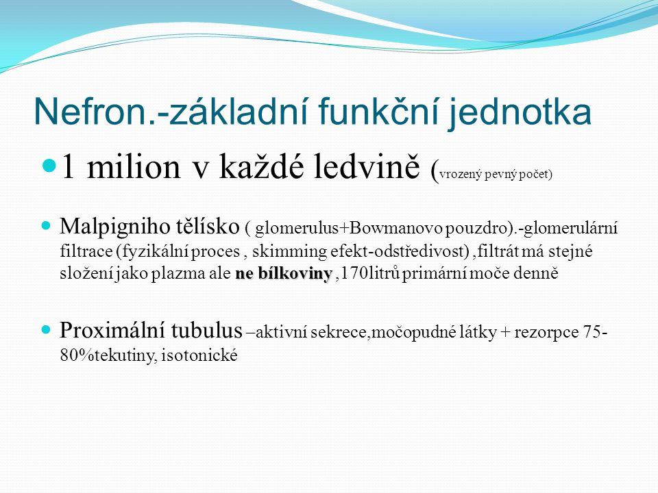 Nefron.-základní funkční jednotka 1 milion v každé ledvině ( vrozený pevný počet) ne bílkoviny Malpigniho tělísko ( glomerulus+Bowmanovo pouzdro).-glomerulární filtrace (fyzikální proces, skimming efekt-odstředivost),filtrát má stejné složení jako plazma ale ne bílkoviny,170litrů primární moče denně Proximální tubulus –aktivní sekrece,močopudné látky + rezorpce 75- 80%tekutiny, isotonické