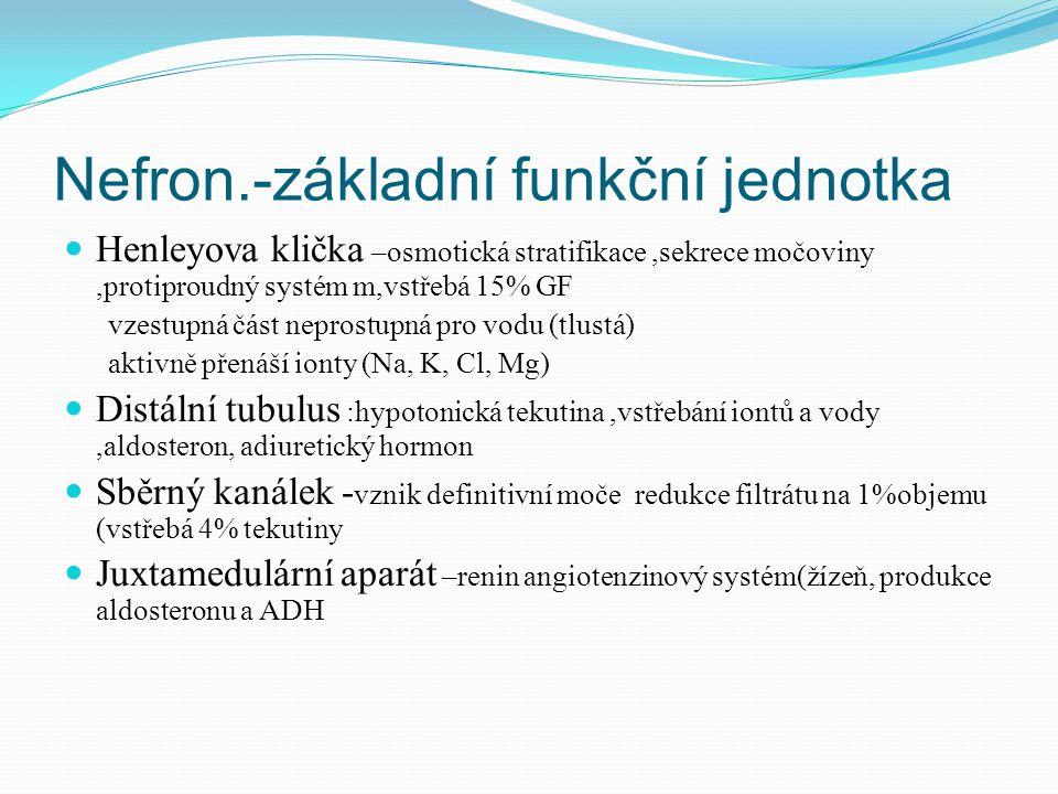 Nefron.-základní funkční jednotka Henleyova klička –osmotická stratifikace,sekrece močoviny,protiproudný systém m,vstřebá 15% GF vzestupná část neprostupná pro vodu (tlustá) aktivně přenáší ionty (Na, K, Cl, Mg) Distální tubulus :hypotonická tekutina,vstřebání iontů a vody,aldosteron, adiuretický hormon Sběrný kanálek - vznik definitivní moče redukce filtrátu na 1%objemu (vstřebá 4% tekutiny Juxtamedulární aparát –renin angiotenzinový systém(žízeň, produkce aldosteronu a ADH