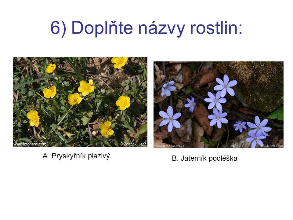 6) Doplňte názvy rostlin: A. Pryskyřník plazivý B. Jaterník podléška