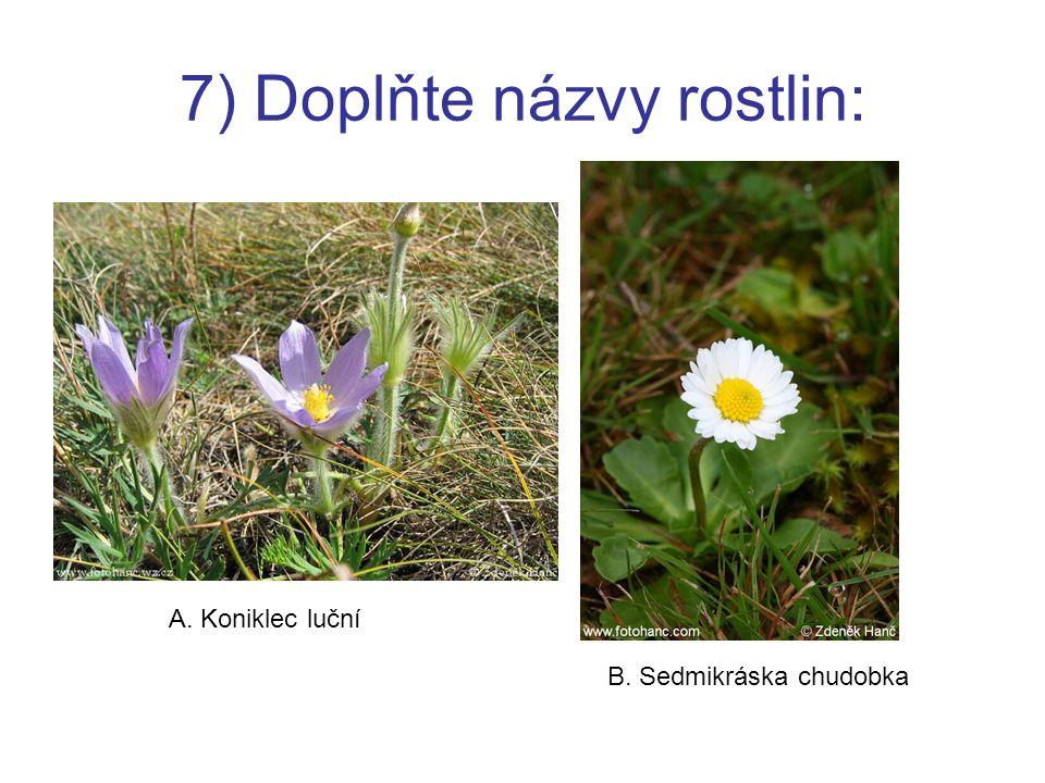 7) Doplňte názvy rostlin: A. Koniklec luční B. Sedmikráska chudobka