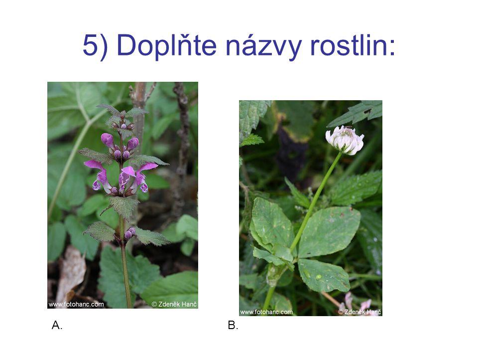 5) Doplňte názvy rostlin: A.B.