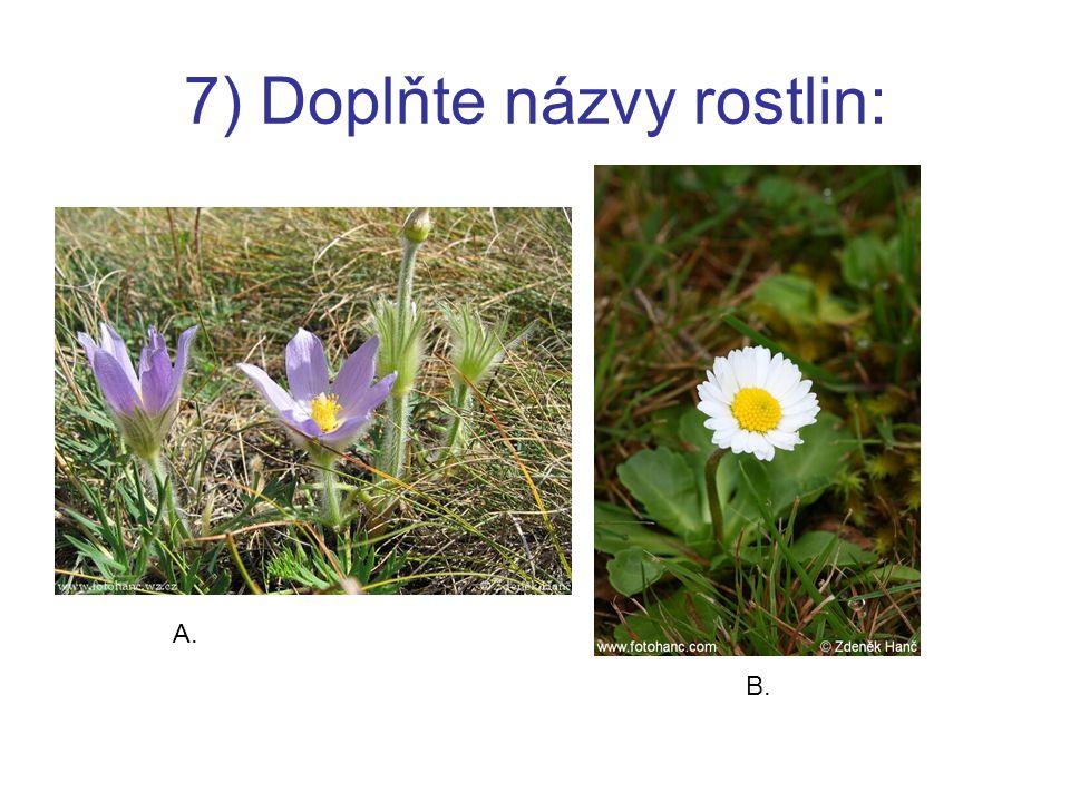 7) Doplňte názvy rostlin: A. B.