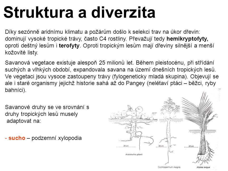 Struktura a diverzita Díky sezónně aridnímu klimatu a požárům došlo k selekci trav na úkor dřevin: dominují vysoké tropické trávy, často C4 rostliny.